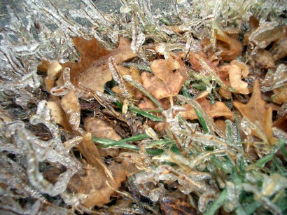 leaves-and-frost.jpg